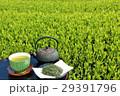 お茶 緑茶 新茶の写真 29391796