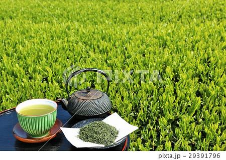 初夏の茶畑 淹れ立ての新茶 29391796