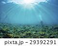 光 スキューバダイビング 水中の写真 29392291