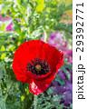 花 クローズアップ お花の写真 29392771