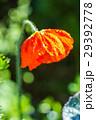 花 クローズアップ お花の写真 29392778