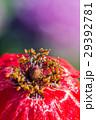 花 クローズアップ お花の写真 29392781