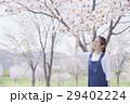 桜 29402224