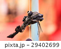 【沼津市戸田】深海魚のつるし飾り 29402699