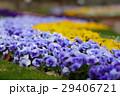 福岡市植物園の花々(3月) 29406721