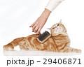 ねこ ネコ 猫の写真 29406871