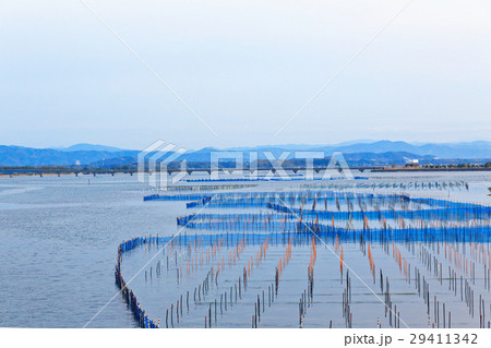 浜名湖の海苔などの養殖棚 29411342