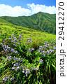 山 花 夏山の写真 29412270