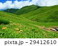 山 花 夏山の写真 29412610