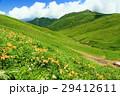 山 花 夏山の写真 29412611