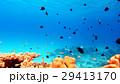 海中 水中 熱帯魚の写真 29413170