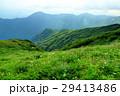 山 花 夏山の写真 29413486