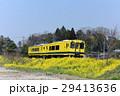 いすみ鉄道 菜の花と菜の花列車 城見ヶ丘 29413636