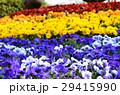 花壇の花々 29415990