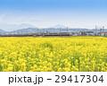 菜の花畑 小田急線 特急ロマンスカー 30000形 EXE  29417304