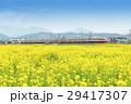 菜の花畑 小田急線 特急ロマンスカー 7000形 LSE  29417307