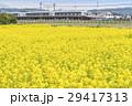 菜の花畑 小田急線 特急ロマンスカー 30000形 EXEα 29417313