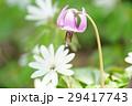 片栗&東一華 29417743