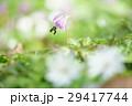 片栗&東一華 29417744