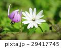 片栗&東一華 29417745