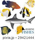 魚 魚類 熱帯のイラスト 29421444