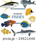魚 魚類 熱帯のイラスト 29421446