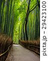 新緑の竹林の道ー嵐山 29423100