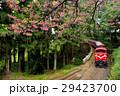 阿里山,森林小火車,櫻花 29423700