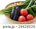 夏野菜 野菜 食材の写真 29428520