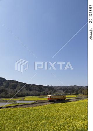 菜の花と小湊鐵道 29432397