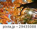 黄葉(大窪寺境内 四国霊場88番札所) 29435088