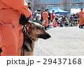 防災の日 災害救助犬 29437168