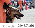 防災の日 災害救助犬 29437169