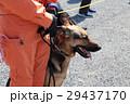 防災の日 災害救助犬 29437170