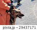 防災の日 災害救助犬 29437171