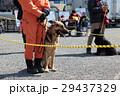 防災の日に災害救助犬のデモンストレーション 29437329