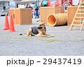防災の日 デモンストレーション 訓練 救助犬 29437419