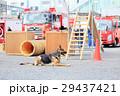 防災の日 デモンストレーション 訓練 救助犬 29437421