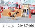 防災フェアと犬 救助犬 消防車 29437460