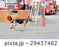 防災フェアと犬 救助犬 消防車 29437462