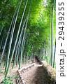 竹林 29439255