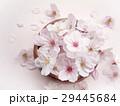 桜の花 29445684
