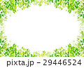 新緑 葉 緑 背景  29446524