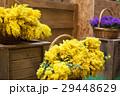 黄色い 黄 黄色の写真 29448629