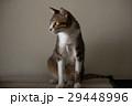 猫 ねこ ネコ 29448996