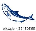 鮭 シャケ さけ 水墨画 水彩画 手描き 29450565