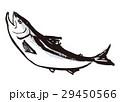 鮭 シャケ さけ 水墨画 水彩画 手描き 29450566