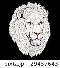 頭 ライオン 動物のイラスト 29457643