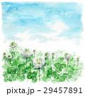 クローバー 白詰草 青空のイラスト 29457891