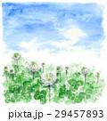 クローバー 白詰草 青空のイラスト 29457893